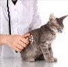 Ветеринарные клиники в Искитиме